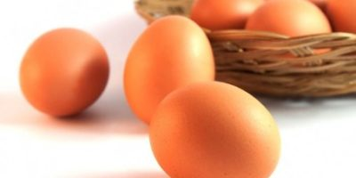 symptoms of egg allergy
