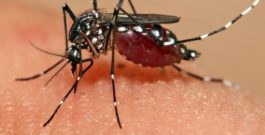 Zika virus: What it is, symptoms, causes and treatment
